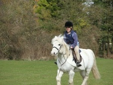 Lead Rein & First Ridden horse - 17 yrs 11.2 hh Grey - Oxfordshire