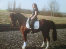 All Rounder horse - 12 yrs 5 mths 15.1 hh Liver Chestnut - Kent