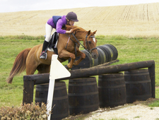 13. 3hh British Riding Pony