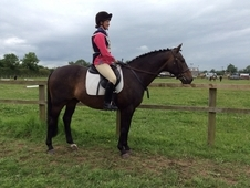 15. 2hh All Rounder **price Reduced**