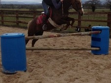 Stunning 13. 2 Pc Pony For Sale