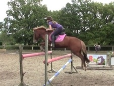 Pony Club Ponies horse - 10 yrs 1 mth 13.2 hh Chestnut - West Sussex