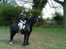 All Rounder horse - 7 yrs 1 mth 14.0 hh Black - West Yorkshire