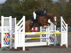 Exceptional 13'2h Pony