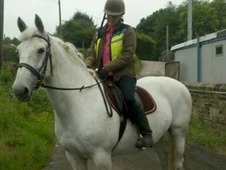 Beautiful 15. 2 hh grey I/d cross mare