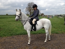 Pc/sj/fun!!! 13. 1 Welsh Sec B Gelding