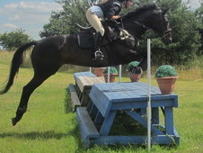 Stunning Tb Hunter And Allrounder