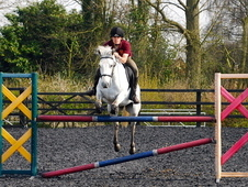 Talented Showjumping/eventing Pony