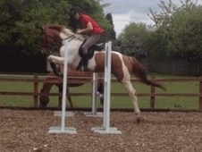 All Rounder horse - 8 yrs 1 mth 17.0 hh Skewbald - Middlesex