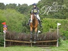 Safe, Experienced, Confidence Giver Stunning Warmblood X