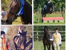 15hh Welsh section D gelding mother/daughter share