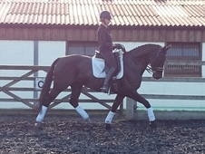 Livery / Dressage training in West Sussex