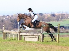 All Rounder horse - 10 yrs 15.2 hh Brown - Leicestershire