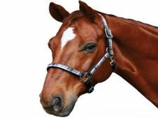 Roma Check Headcollar NEW. Hig - UK