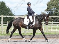 Already Successful Affiliated Dressage/competition Horse