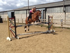15hh Connemara X Talented All Rounder (huge Jump!)