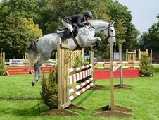 A Top Class Horse Who Is The Simplest Of Rides