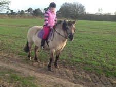 All Rounder horse - 11 yrs 13.1 hh Dun - Cumbria