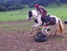 13. 2hh Pony For Sale