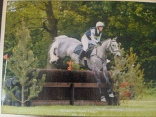 Eventers horse - 7 yrs 11 mths 17.0 hh Dapple Grey - Northumberland
