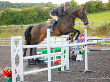A Super Scopey Mare Who Is Very Easy To Ride
