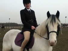Cobs horse - 7 yrs 14.2 hh Coloured - Cheshire