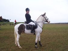 Eye catching 13. 2hh all rounder