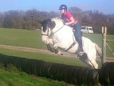 Striking 15. 2hh gelding