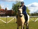15'2 cob x gelding for part loan - West Sussex