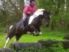 15hh Registered ISH coloured mare. Perfect teenagers / mother dau...