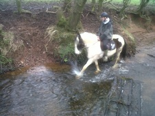 Riding Club Horses/Ponies horse - 9 yrs 14.2 hh Skewbald - Cheshire