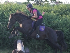13. 2 Moorland Mare For Sale