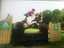 15hh Coloured All-rounder Loves To Jump