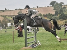 Professional or amateurs horse