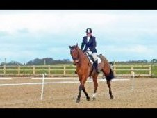 **sold** Super Talented Polish Warmblood