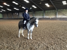 Cracking Pony For Sale Or Lwvtb