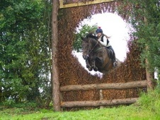 All Rounder horse - 12 yrs 17.2 hh Bay - Derbyshire