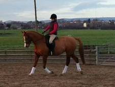 Very Promising Dressage Prospect - Now Reduced For Quick Sale