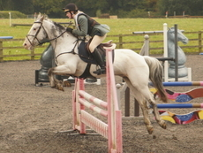 Super talented BS/PC/RC Competition Pony
