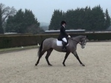 All Rounder horse - 5 yrs 15.2 hh Iron Grey - Berkshire