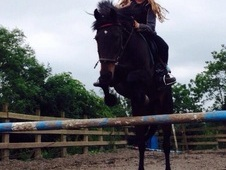 14. 1 pony for sale