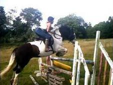 14. 2hh Medium-weight Showing, Jumping, Xc, Pc, Dressage Pony- Yo...