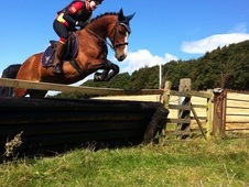 14. 1hh Bay Mare 9 years old welsh x