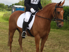Summer Ii - 14. 2hh, 12 Year Old, Chestnut Mare For Sale