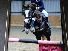 **MUST SELL DUE TO NEW PONY ARRIVING SOON OPEN TO OFFERS**Fun Com...