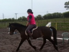 All Rounder horse - 10 yrs 7 mths 13.2 hh Bay - Cumbria