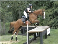 All Rounder horse - 8 yrs 3 mths 16.2 hh Chestnut - Cambridgeshire