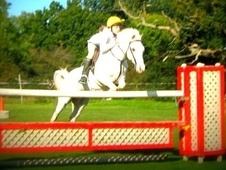 Pony Club Ponies horse - 13 yrs 1 mth 13.3 hh Grey - Kent