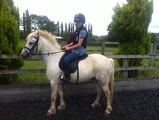 Super 12h 5yo Welsh Sec A Gelding