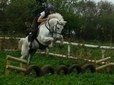 All Rounder horse - 5 yrs 14.2 hh Grey - Cheshire